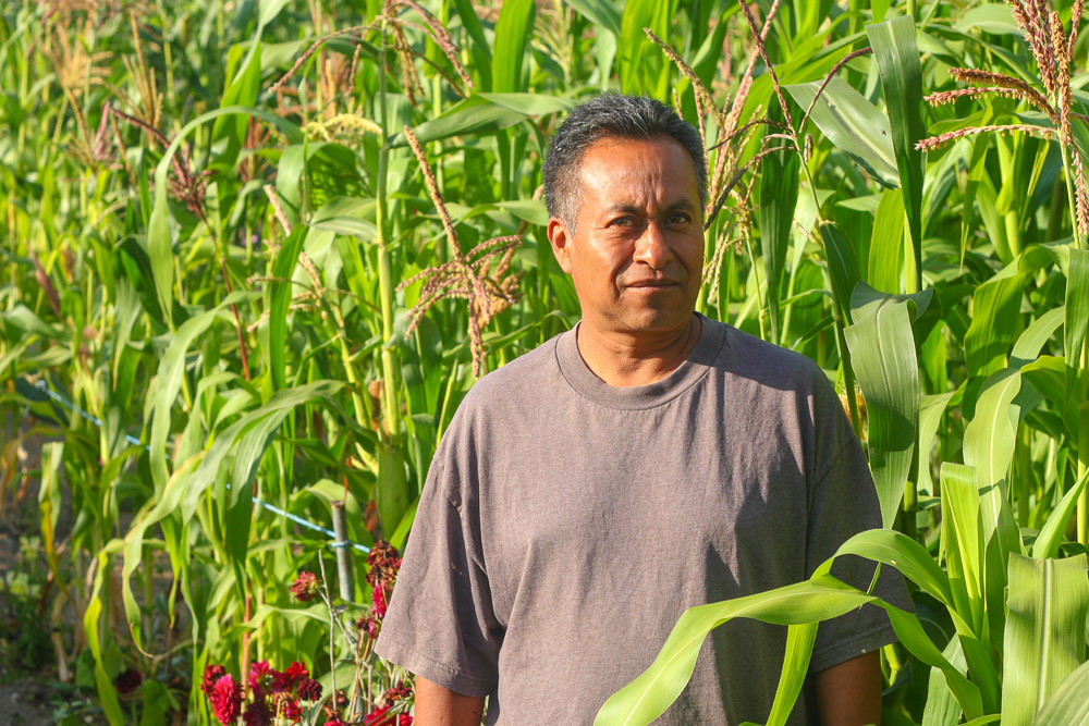 Franscisco stands in front of his robust corn crop.  The fresh ears will be grilled as sweet elotes, the mature dried grain will be ground into masa for tortillas.   Let's ensure that Francisco has a place to grow his maiz next year!