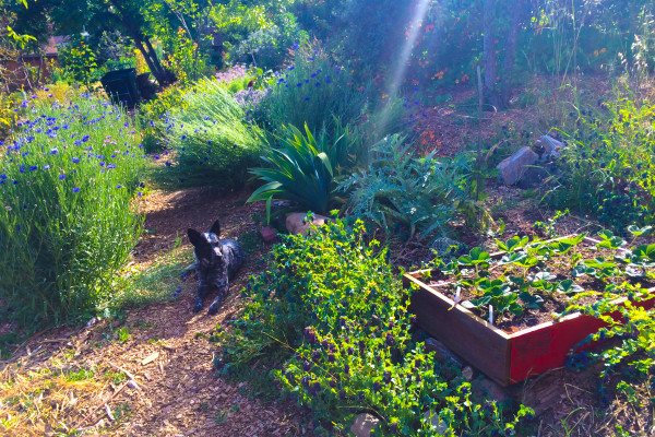 Golden hour in a wildflower laced food forest