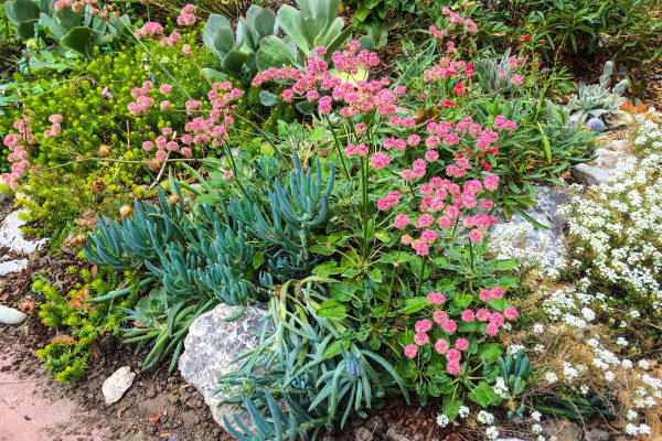 Coastal bluffs themed rock garden incorporating several wildlife-beloved native perennials