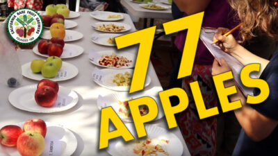Mini-Doc: Tasting 77 Apples in California